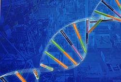 Bild-1 DNA